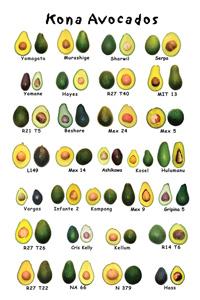 vrste avokada