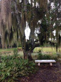 meditate on a bench outdoors when you can