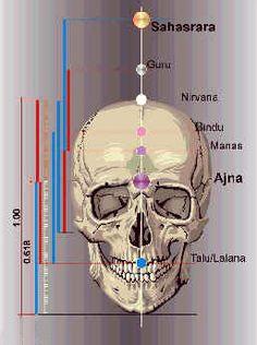 bindu čakra