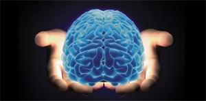 mozak u rukama