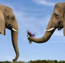 slon poklanja cvet drugom slonu