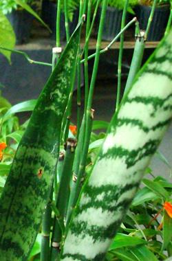 Bad and Good Feng Shui Plants | Feng Shui Articles